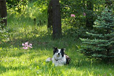 Mindig zöld rétek és vadvirágok otthona